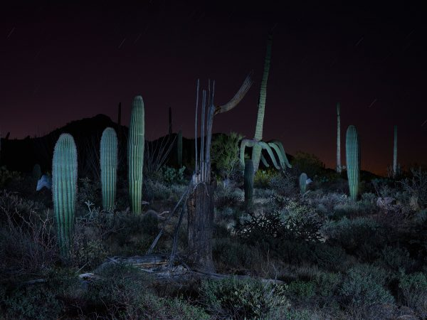 Nocturnal Arid