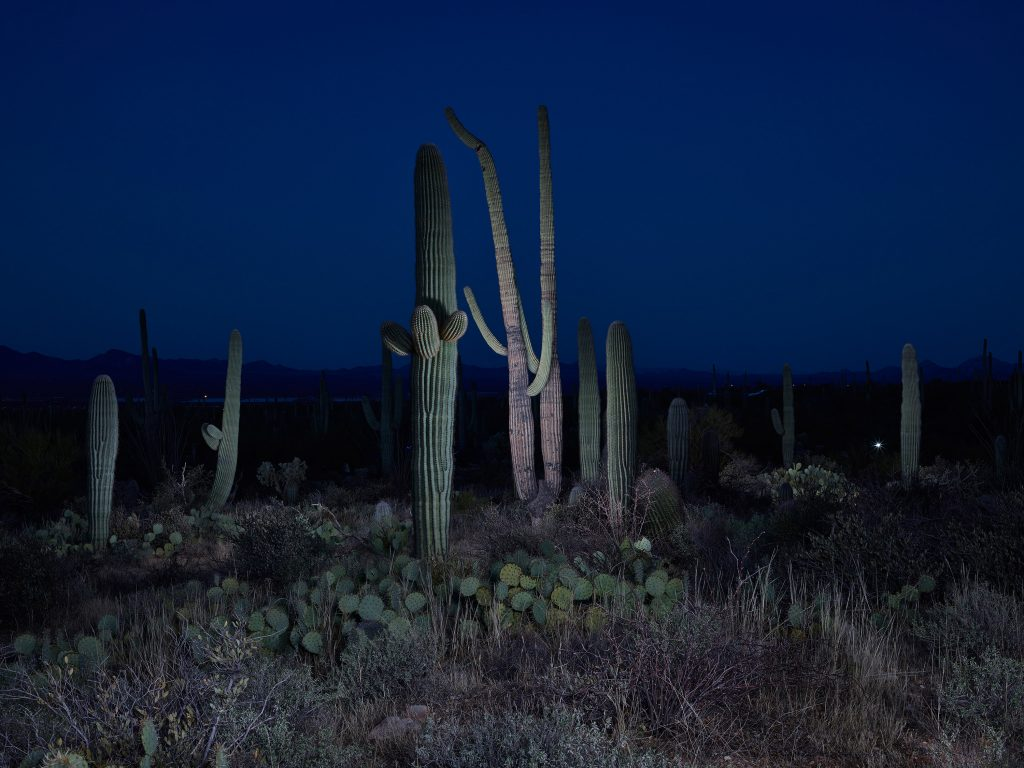 Cactus, Study 2, Saguaro National Park, Arizona, USA, 2016