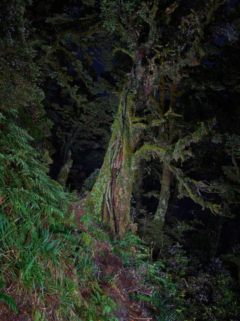Manuoha Track, Study 5, Te Urewera, New Zealand, 2017