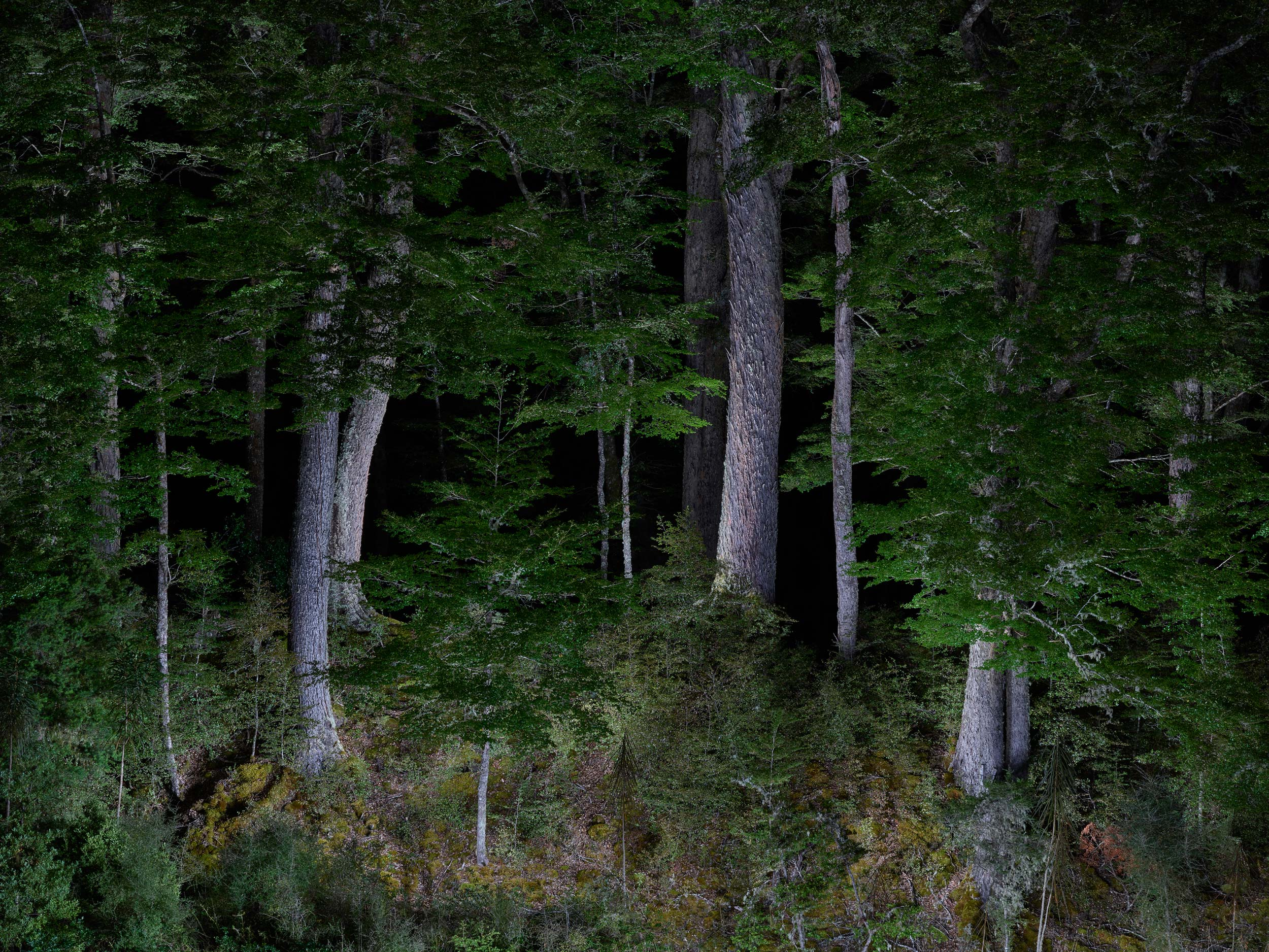 Nocturnal Forest, Lake Sylvan, Routeburn Region,  New Zealand, 2017