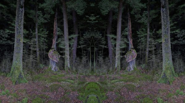 Nocturnal Forest – Were we the first?